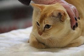 SH NS CAT.jpg