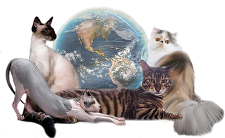 full cat and globe logo.png
