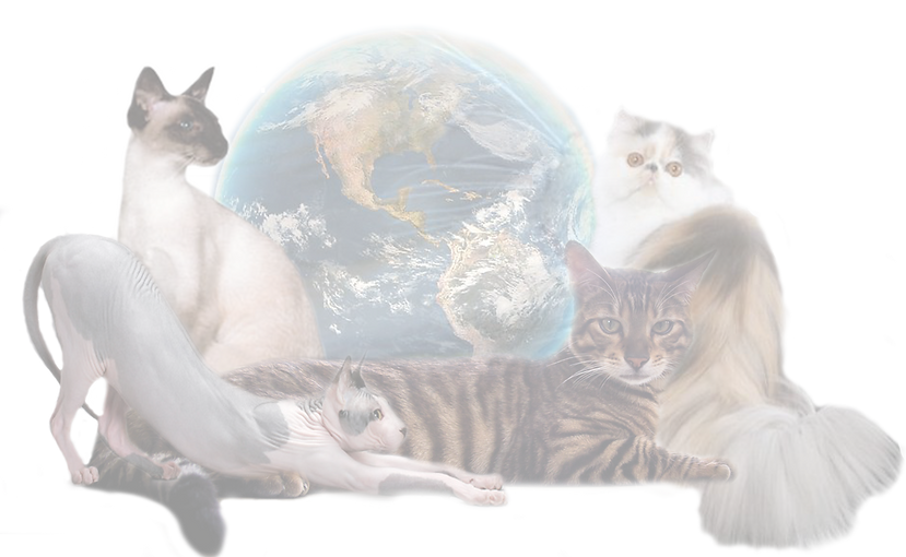 full%20cat%20and%20globe%20logo_edited.p