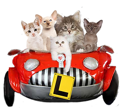 kittens in car 2.png