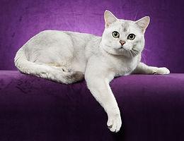 SH ENTIRE CAT.jpg
