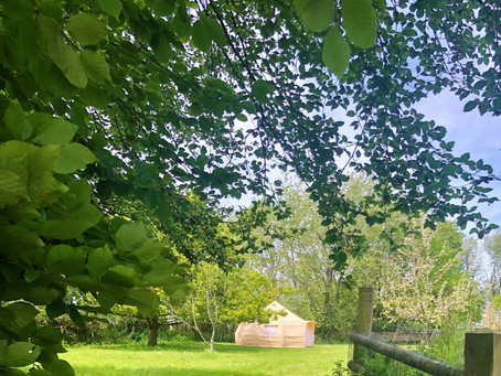 Two new Glamping fields ready for May