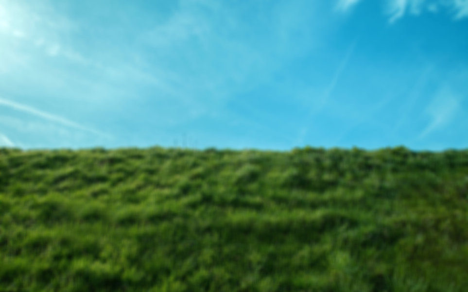 Green%20grass%20field%20under%20a%20blue