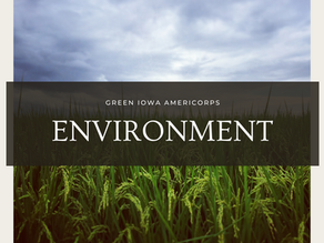 Simple Ways YOU Can Help Out the Environment