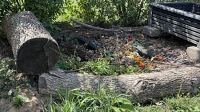 Composting 101 Website