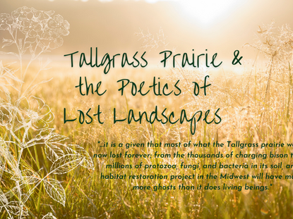 Tallgrass Prairie & the Poetics of Lost Landscapes