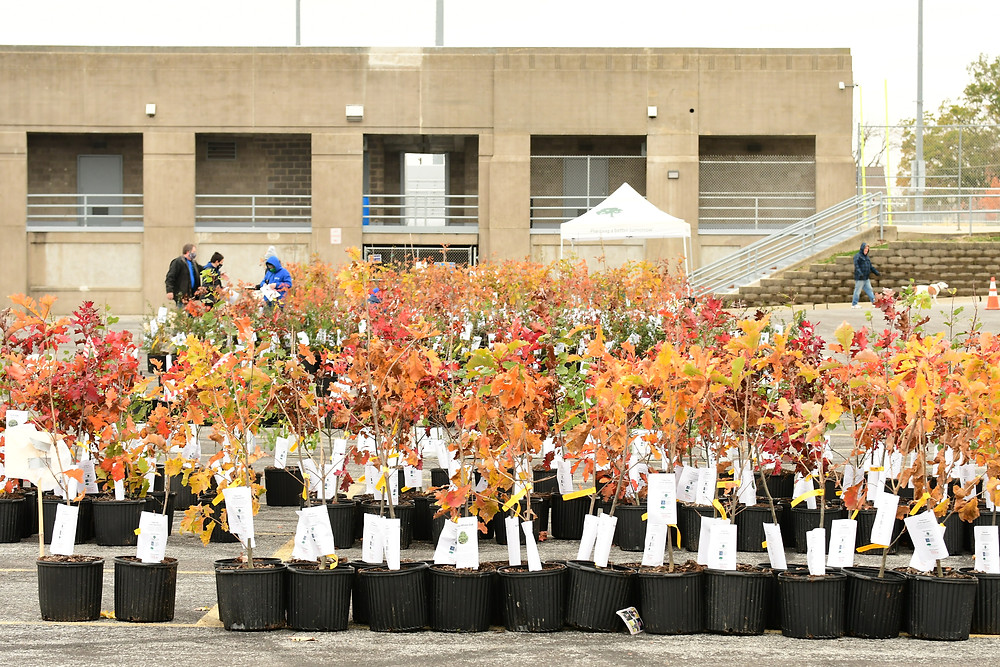 Several rows of colorful saplings are waiting to be adopted and planted.