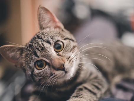 Feline Body Language - Identifying Your Cat's Behavior