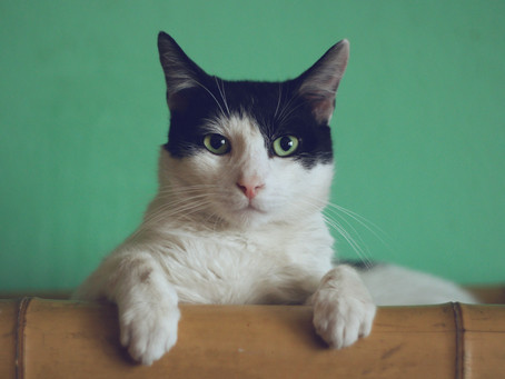 Human Foods Pose Serious Health Risks to your Cat