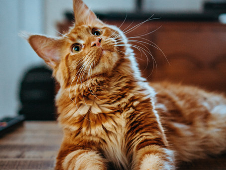 Facts on Cat Health