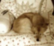 little dogs colorado