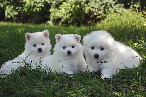 pups3outside.jpg
