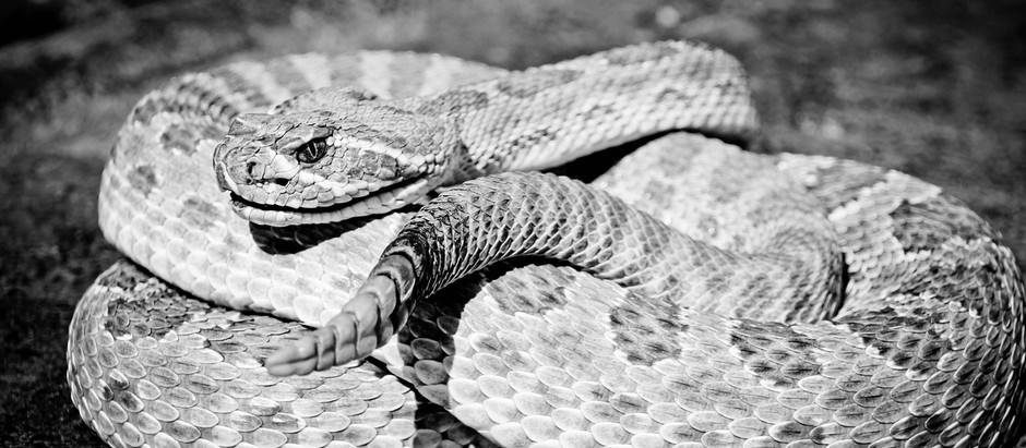 My Latest Snake Dream