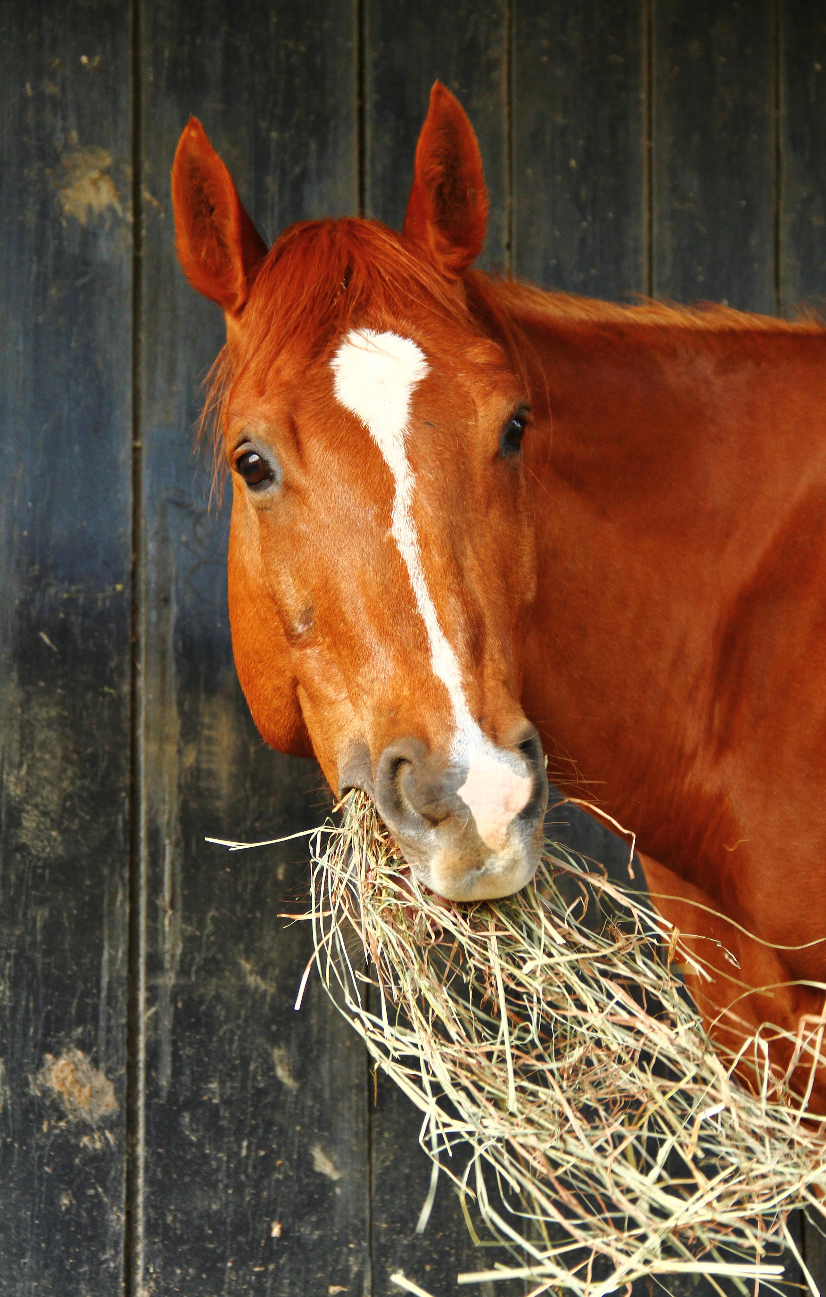 A Zippy Horse