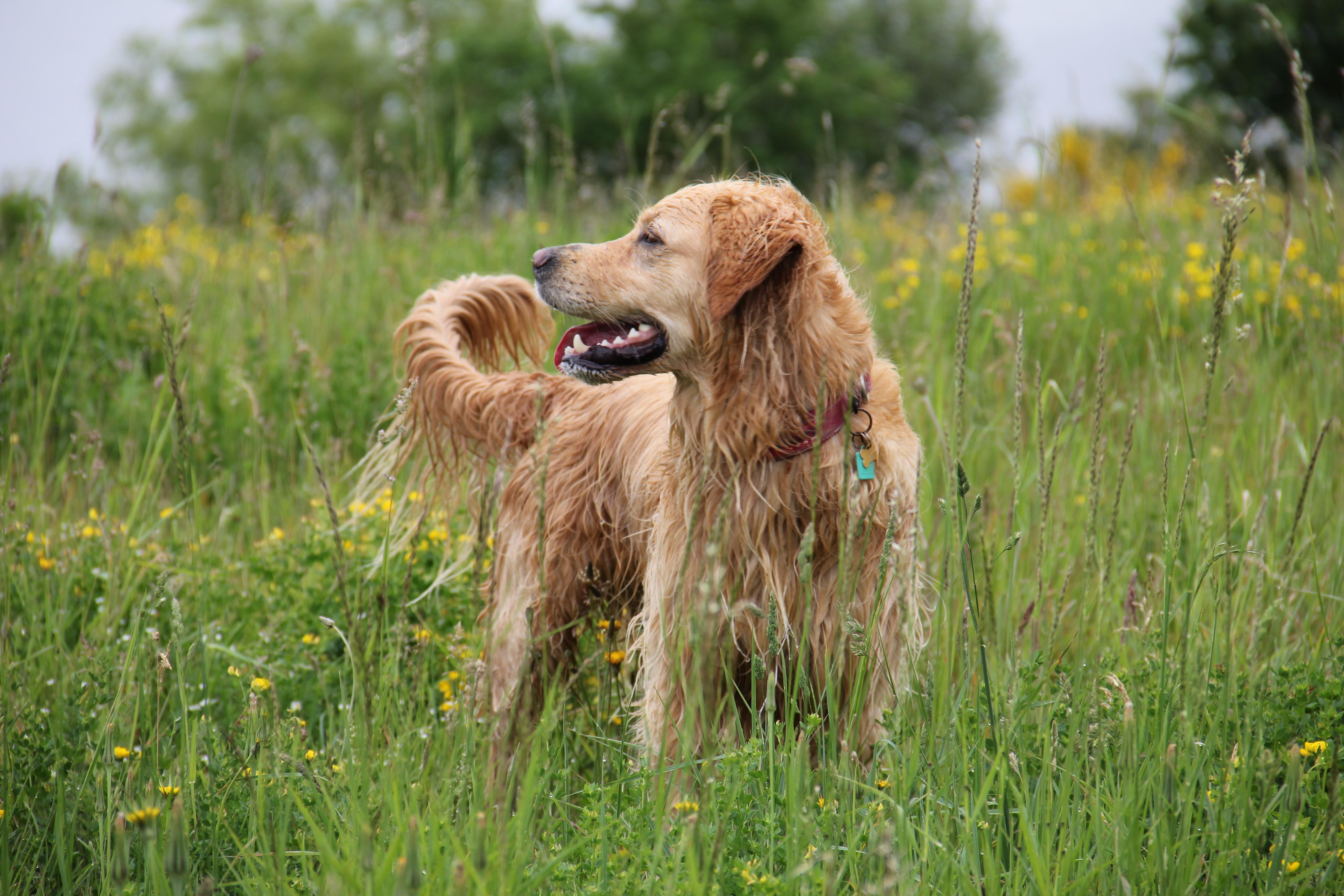 Canine Photoshoot