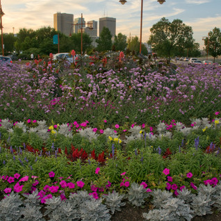 Flowers at the Forks