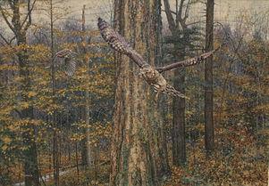 Hawk in Autumn (3).jpg