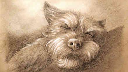 Dog Portrait [2021]