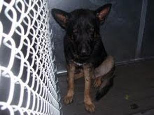 2010 dogs Van.jpg