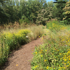 Bordentown Township Environmental Commission Update