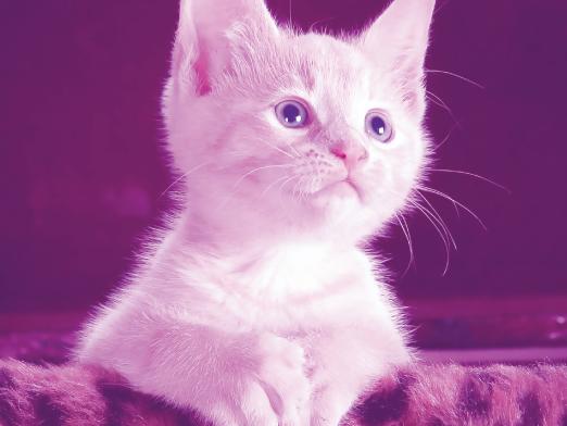 Book Online Meet & Greet New Customer Cat Sitting