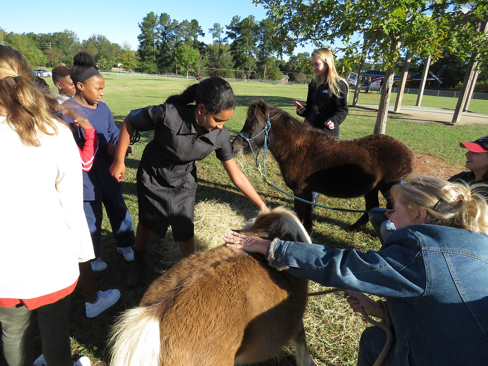 Students petting mini horses provided by local non-profit, and BCSD Partner In Education, Horsedreams.