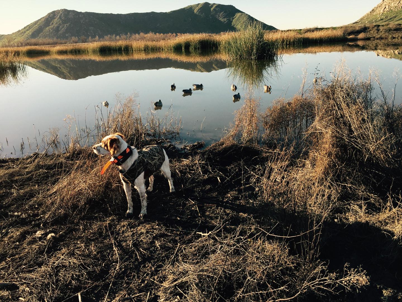Beau Duck hunting.jpg