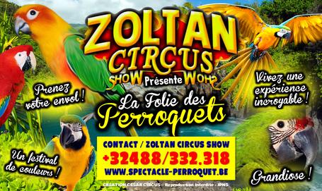 ZOLTAN - Perroquets.PNG