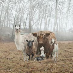 ferme-famille-animaux-gang-2.jpg
