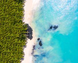 Palmtree and Turquoise -1.jpg