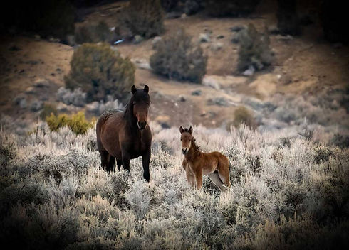 web-mare-and-foal.jpg