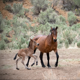 Monty's Mare and Foal