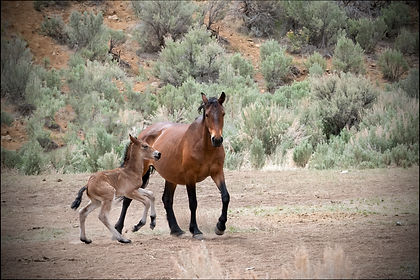 5F1A0330 Montys Mare and foal (1).jpg