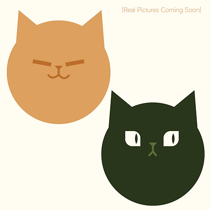 Staff_Temp Icons_Cats.png