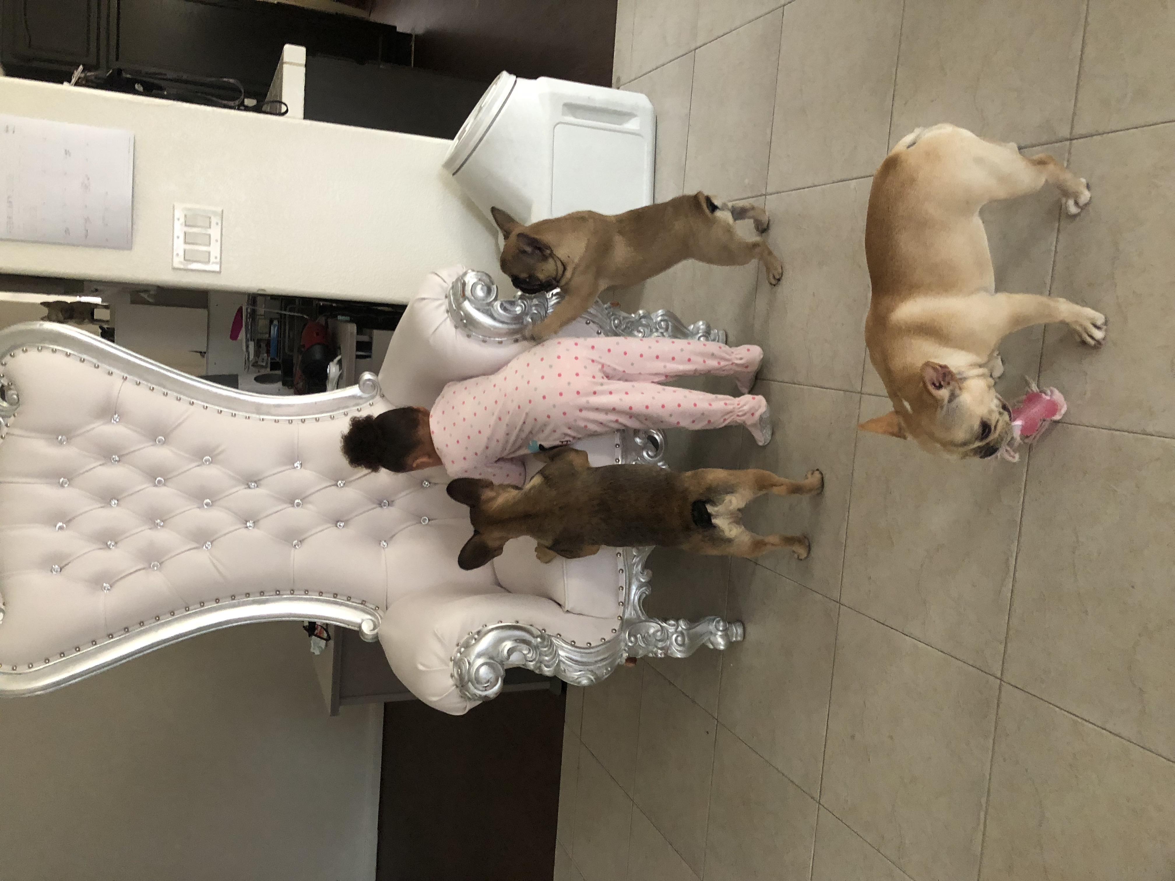 kids french bulldog family