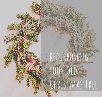 Repurposing Your Old Christmas Tree