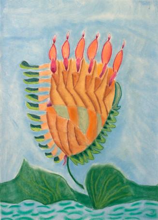 5. Cactus Flower