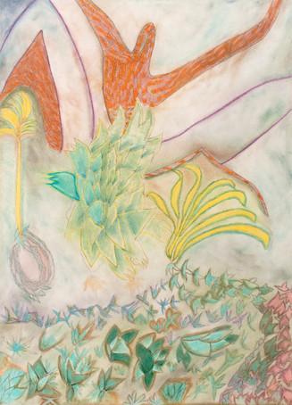11. Flores Del Pardiso