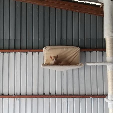 アトリエ猫-1ヶ月-