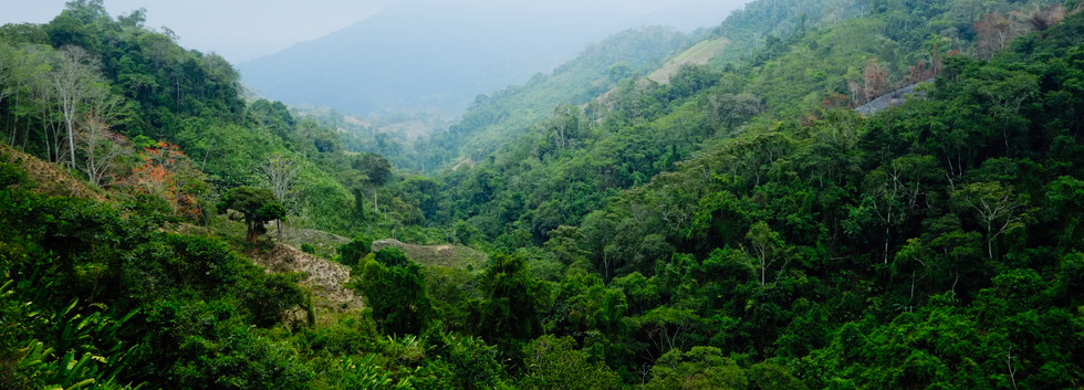 Jungles of Colombia
