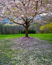 flower-tree-park-landscape-92933.jpg