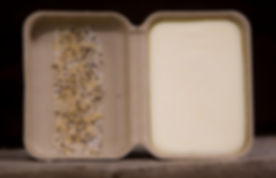 open clamshell with seeds.jpg