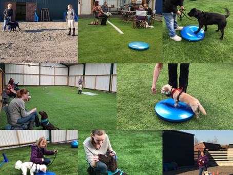 Dog training classes - Are they right for you and your dog?