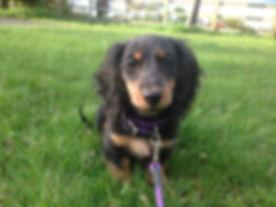 Puppy training dog