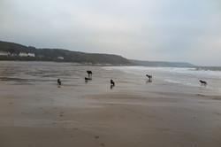 beachromp.JPG