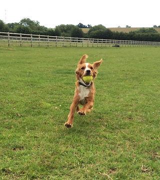 playing dog catching ball