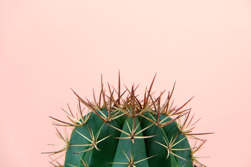 Sarah Vella Designs - Green & Pink Cactus