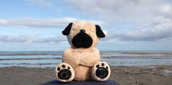 Mindful Moe Pug on Blackrock Beah