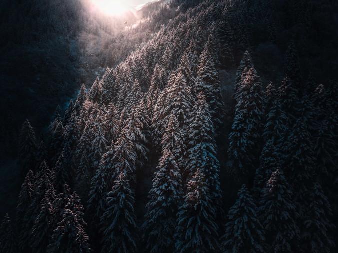 Uzungöl Ormanları