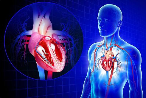 cardiovascular_system-57f6d56a3df78c690f
